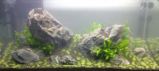 Ikan Hias Air Tawar Termahal tema aquarium