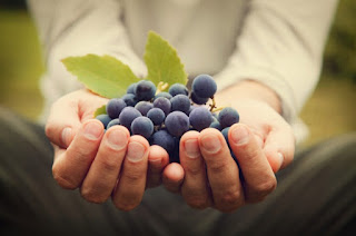 7 Benefits of Grape Sugar As a Source of Body Glucose - Healthy T1ps