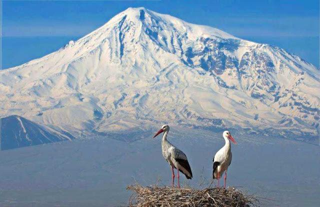 Industria minera pone en peligro a aves armenias