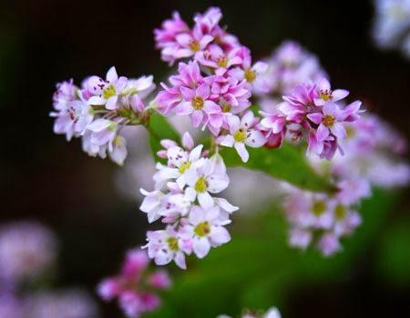 12 mùa hoa miền Bắc