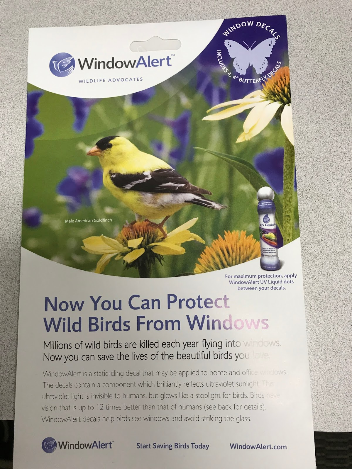 Eastside Cats Saving Birds - Invisible window decals for birds