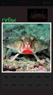 на морском дне рыба плавает с накрашенными губами
