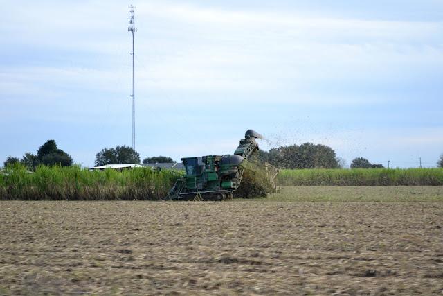 уборка сахарного тростника, Луизиана