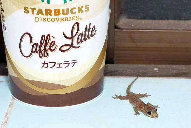 Starbucks Coffee, cup, gecko, window sill, latte