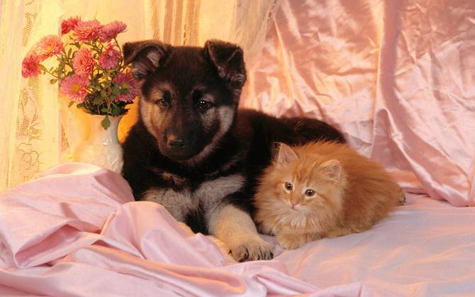 All Wallpapers: Kitten And Puppy Hd Wallpapers 2013