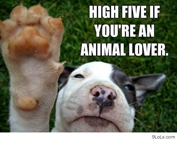Rules of the Jungle: Funny dogs with sayings