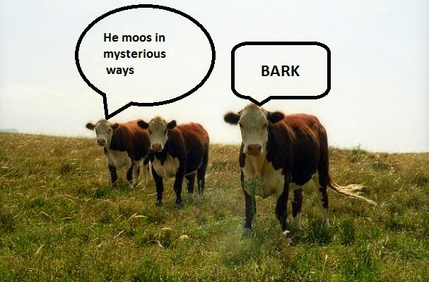 he moos in mysterious ways dairy herd