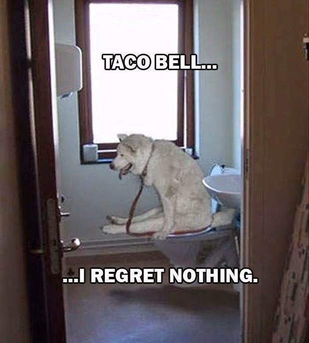 Funny Taco Bell No Regrets Dog Joke Picture