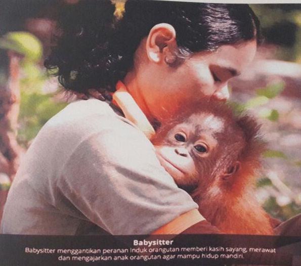 BCA Dukung BOSF Untuk Pelepasliaran Orangutan di Hutan Kehje Sewen