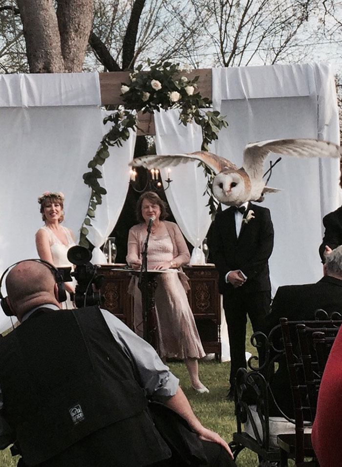 Perfect Timing, Perfect Angle...Hilarious Result! - Woman Marries Owl