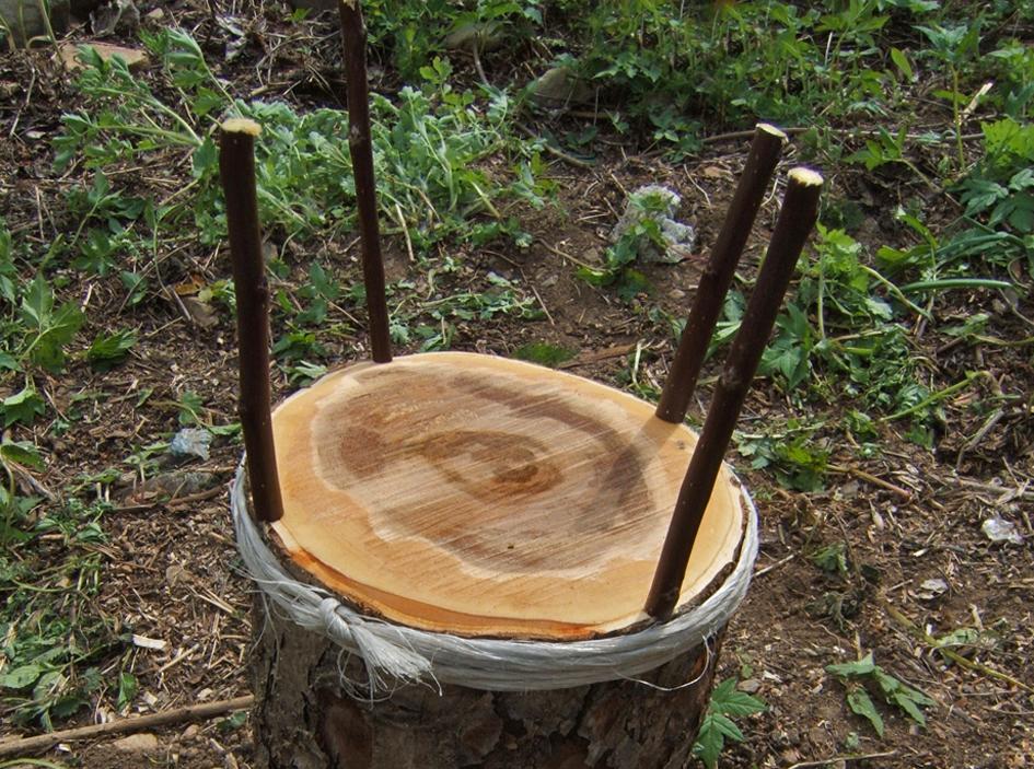 Orto delle piane agricoltura naturale di montagna for Potatura del melo