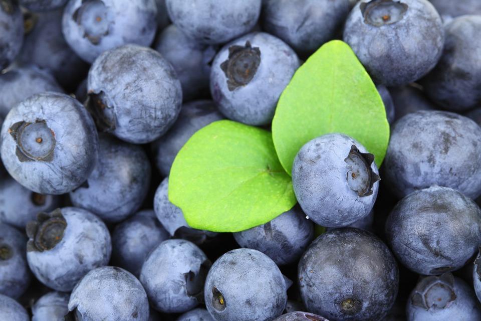 Bluberi Menu Makanan Terbaik Untuk Diet Menurunkan Berat Badan