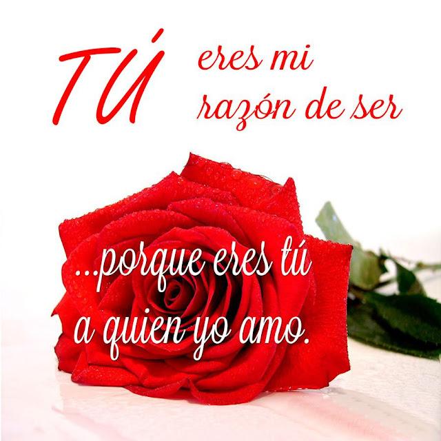 Frases para enamorar  con rosas