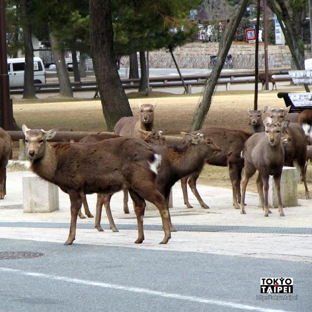 【奈良公園】1200隻鹿等著餵 觀光客餵鹿全攻略