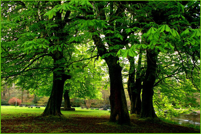 beautiful green trees in the park