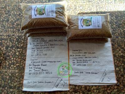Benih Padi Pesanan    JALALUDDIN ABDSALAM Aceh Utara, Aceh.    Benih Sebelum di Packing.