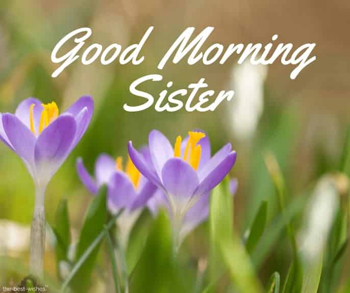 hd images of good morning sister