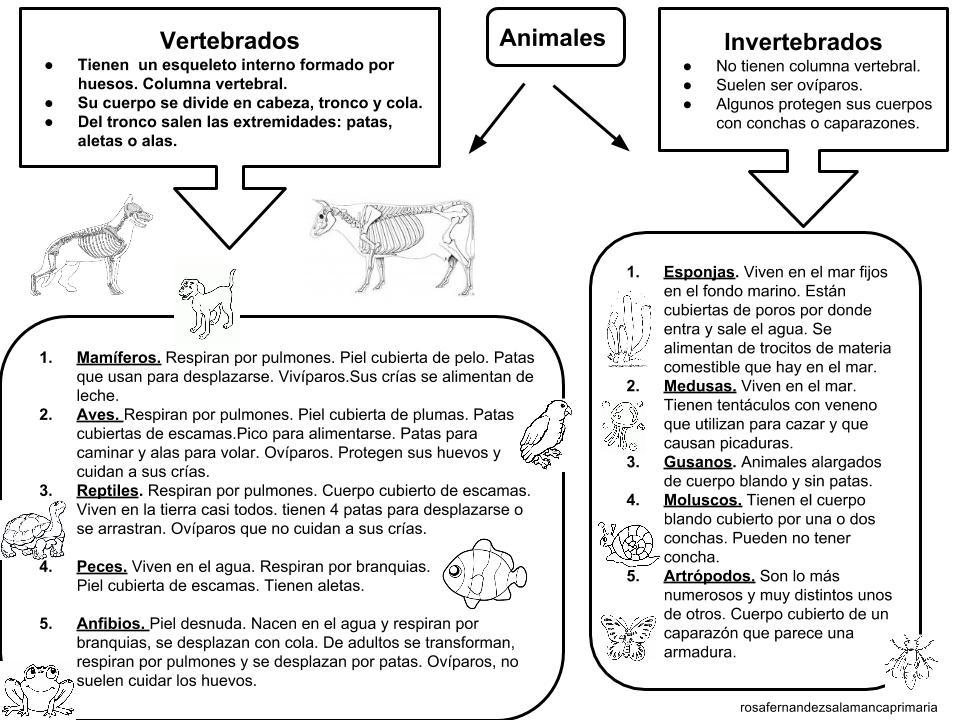 Maestra de Primaria: Esquema del tema Los animales. Clasificación ...