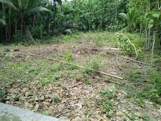 Tanah Dijual Butuh Uang Kulonprogo di Karangsari Dekat Bandara Jogja 6