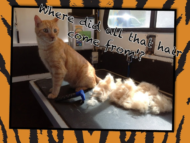 mobile cat groomer queen creek, az