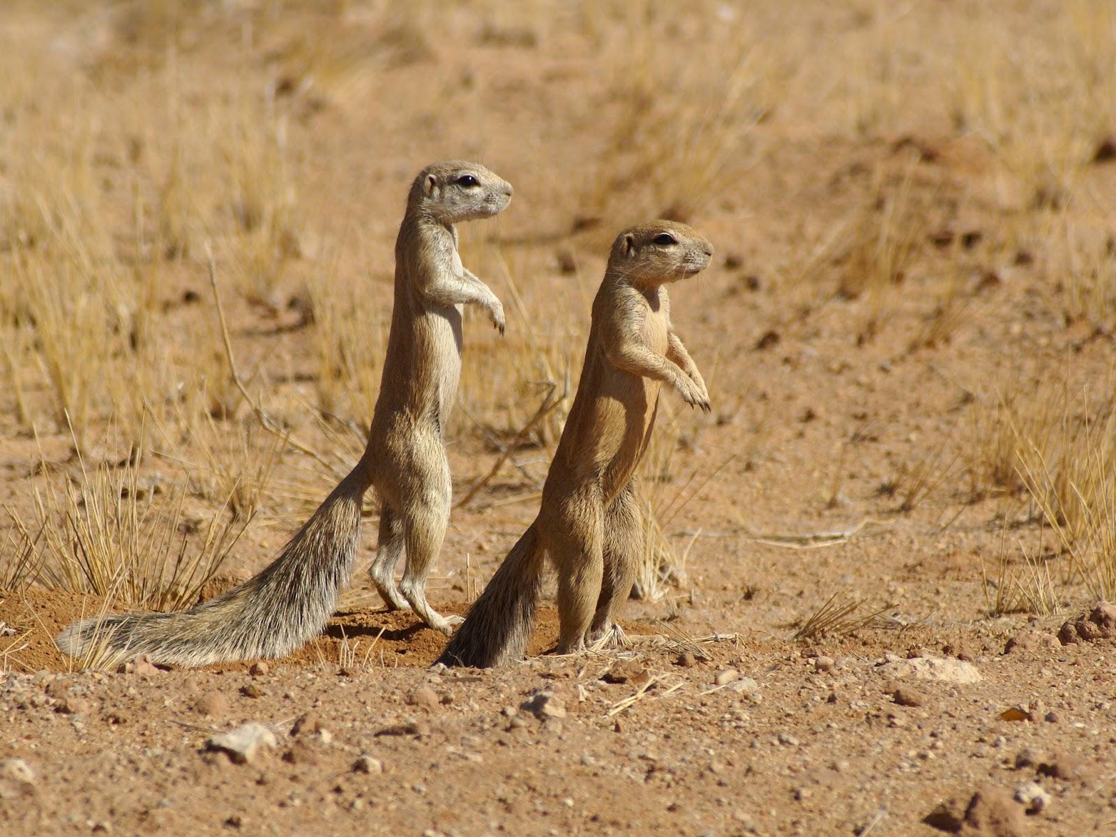 Mammals Animals: Xerus inauris