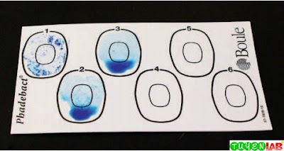 Commercial coagglutination test card showing positive (1) and negative (2 and 3) reactions.