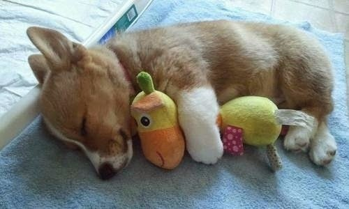 Adorable Puppies Sleeping and Cuddling with Stuffed Animals1