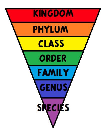 Mengklasifikasikan Makhluk Hidup : mengklasifikasikan, makhluk, hidup, Pengertian, Klasifikasi, Makhluk, Hidup, INIRUMAHPINTAR.com