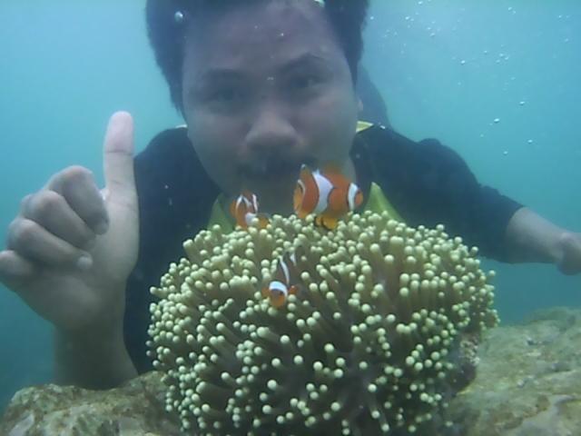 spot foto terumbu karang di pantai pahawang