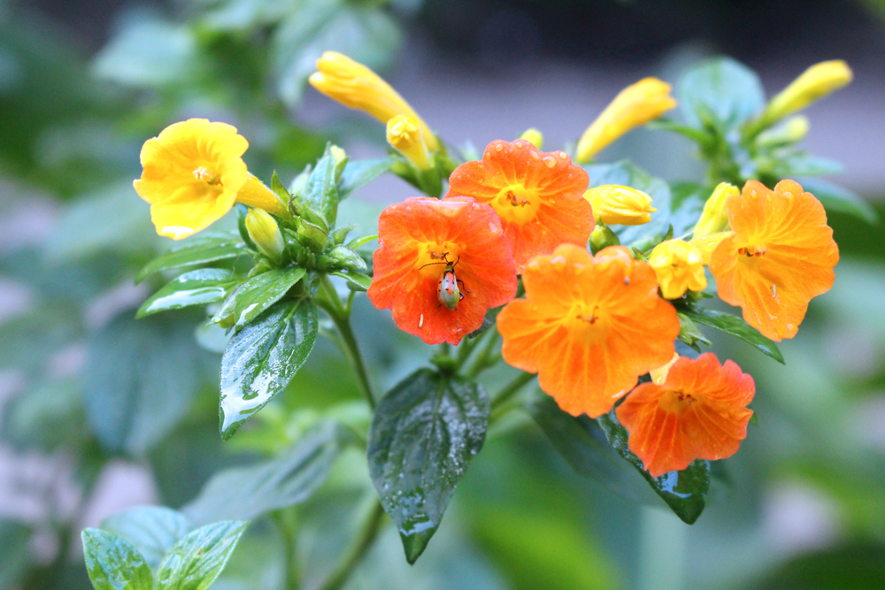 Beautiful flowers in the mountains, Peru - lifestyle & travel blog