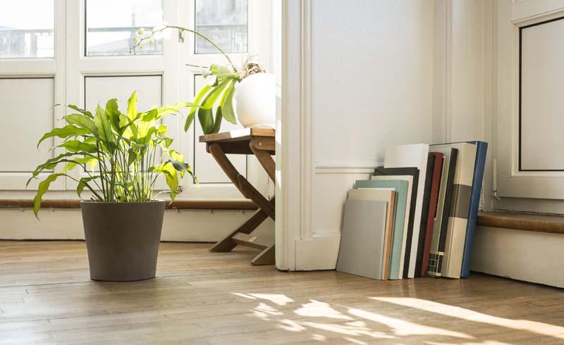 bugs, plants, how to keep bugs away