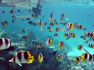 undersea wallpaper