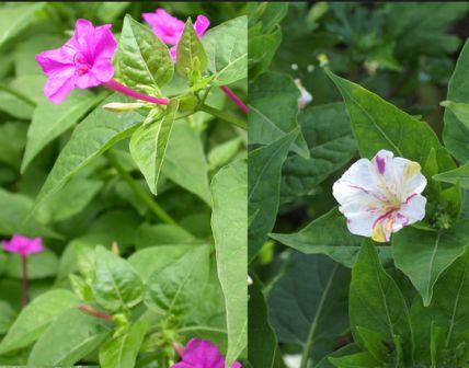 Tiga Macam Gerak Pada Tumbuhan
