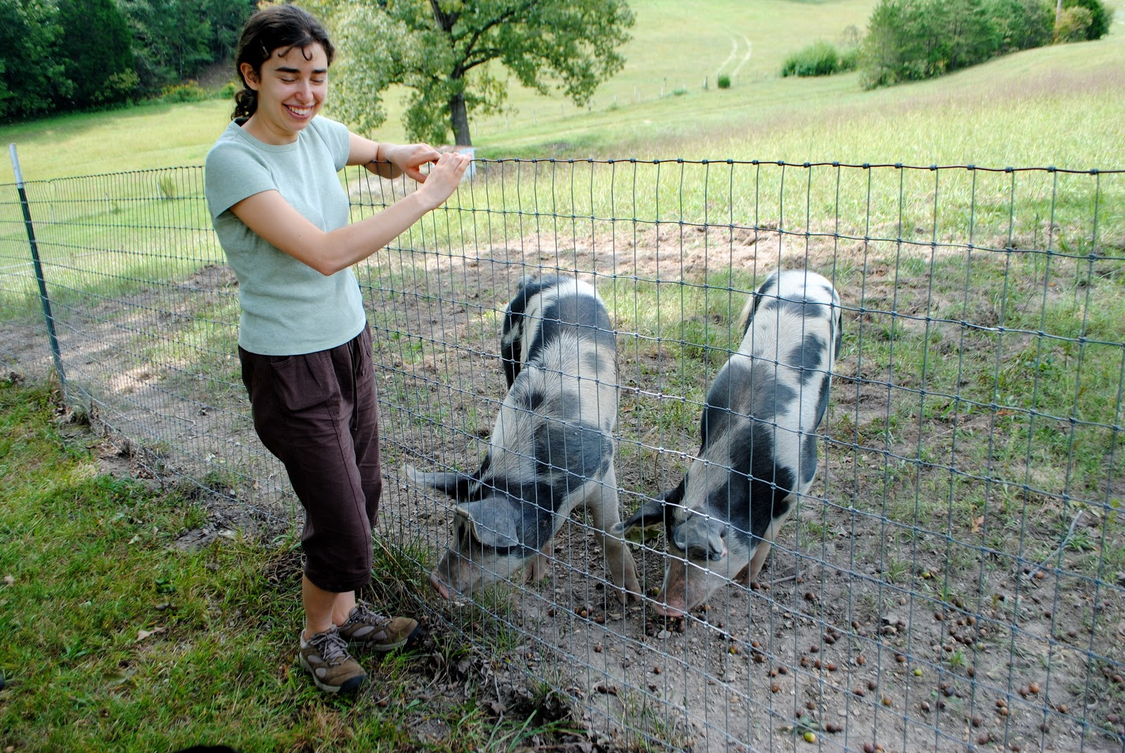 Adventures on Zephyr Hill Farm: The Cost of Raising a Pig