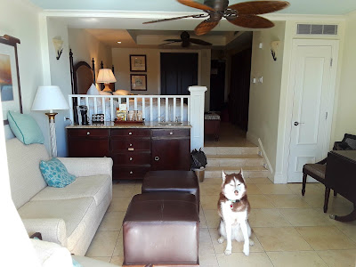Pet Friendly Hotels in Florida.  Dog Travel Tips. Dog Friendly