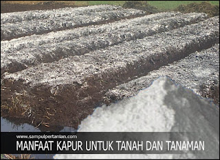 Manfaat Kapur untuk Tanah dan Tanaman