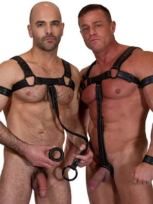 665 Leather Bulldog Neoprene Harness Full Gayrado Online Shop