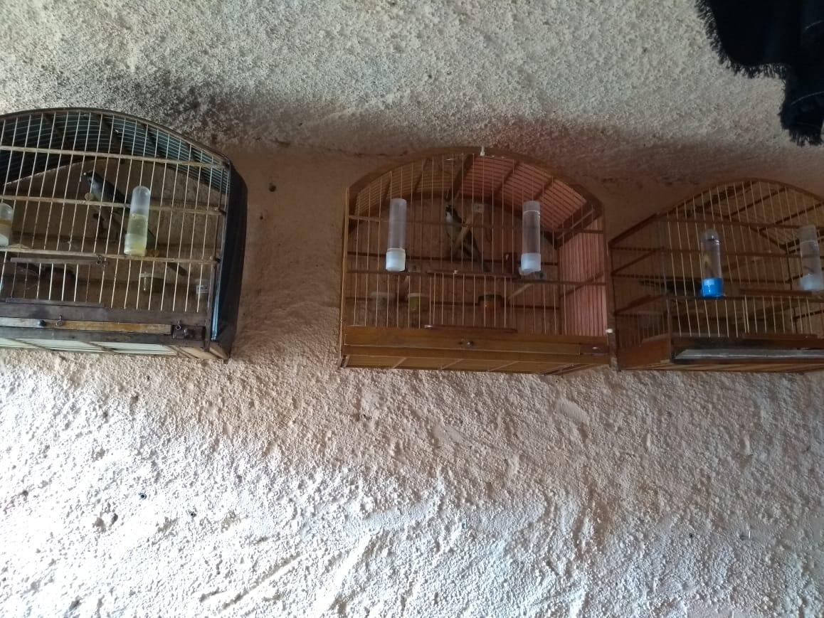 Polícia apreende pássaros silvestres criados irregularmente em São João da Boa Vista