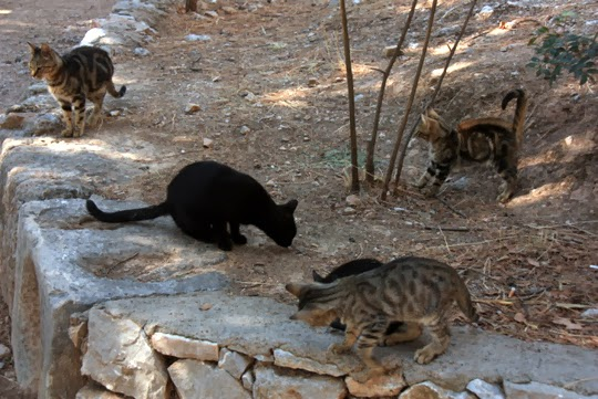 Cats of Athens Greece