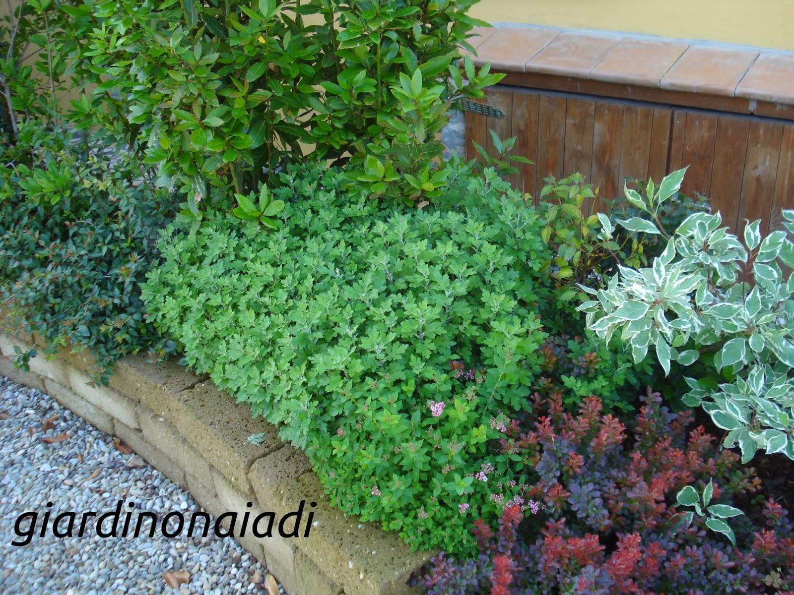 Il giardino delle naiadi progettare bordure e aiuole for Piante da aiuola sempreverdi