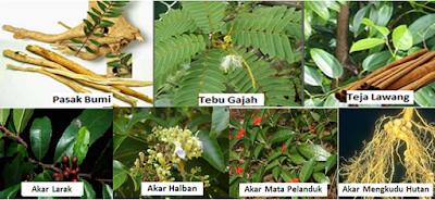 Herbal Kpoi Radix Sinergi - www.infojagakesehatan.blogspot.co.id - isman
