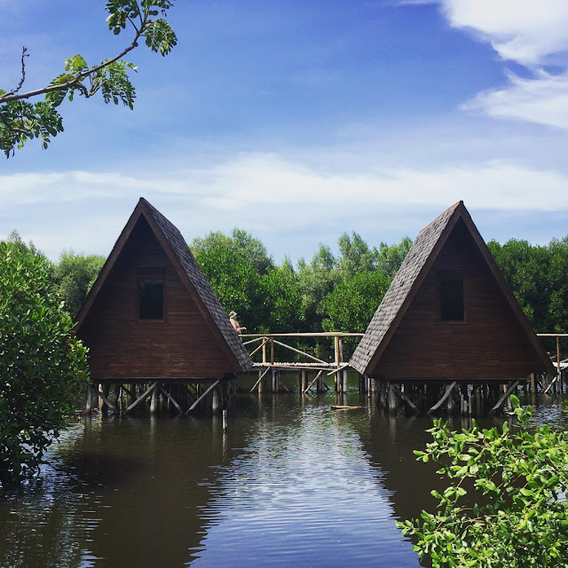 foto taman wisata alam mangrove pik