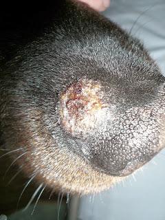 Gisis Blog - Von Tag zu Tag: Wenn mein Hund eine