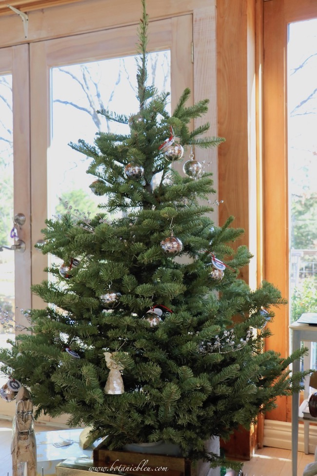 Silver sleigh bell Christmas tree is a fresh-cut Noble fir tree