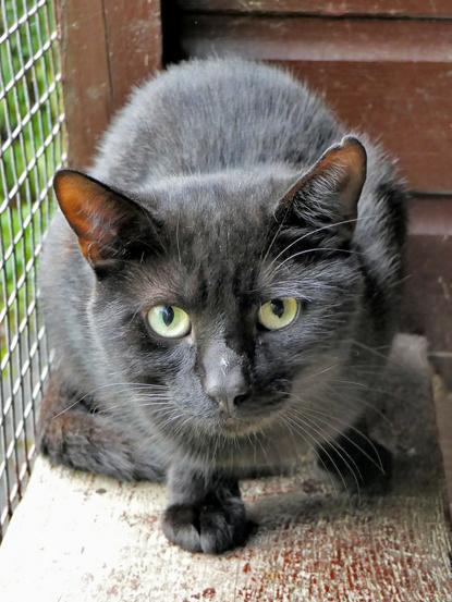 black cat  in outdoor pen