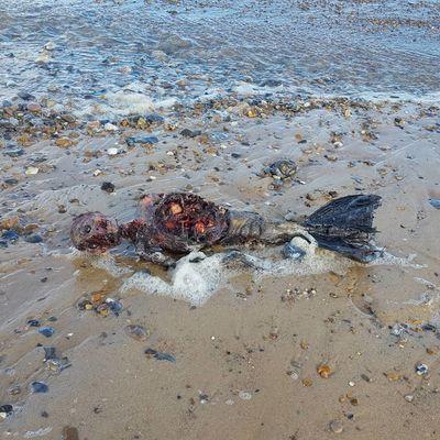 Corpo de 'sereia' encontrado em praia na Inglaterra intriga internautas