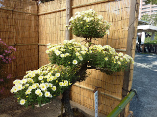 "A small tree with flowers instead of leaves in the Sorakuen Gardens, Kobe. There's a sign that saids ""Kobe Mayors Prize"""