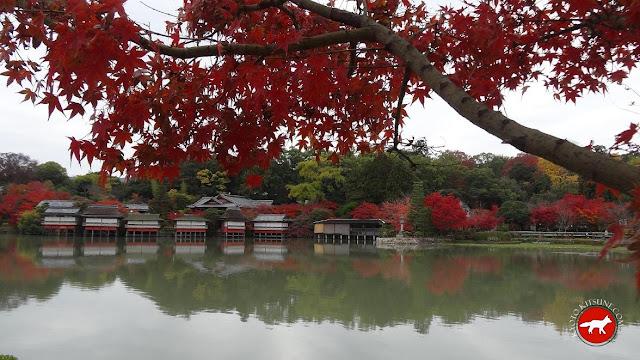 érables en automne à kyoto au bord d'un lac