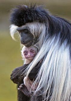 Fantásticas fotos de padres y crías.