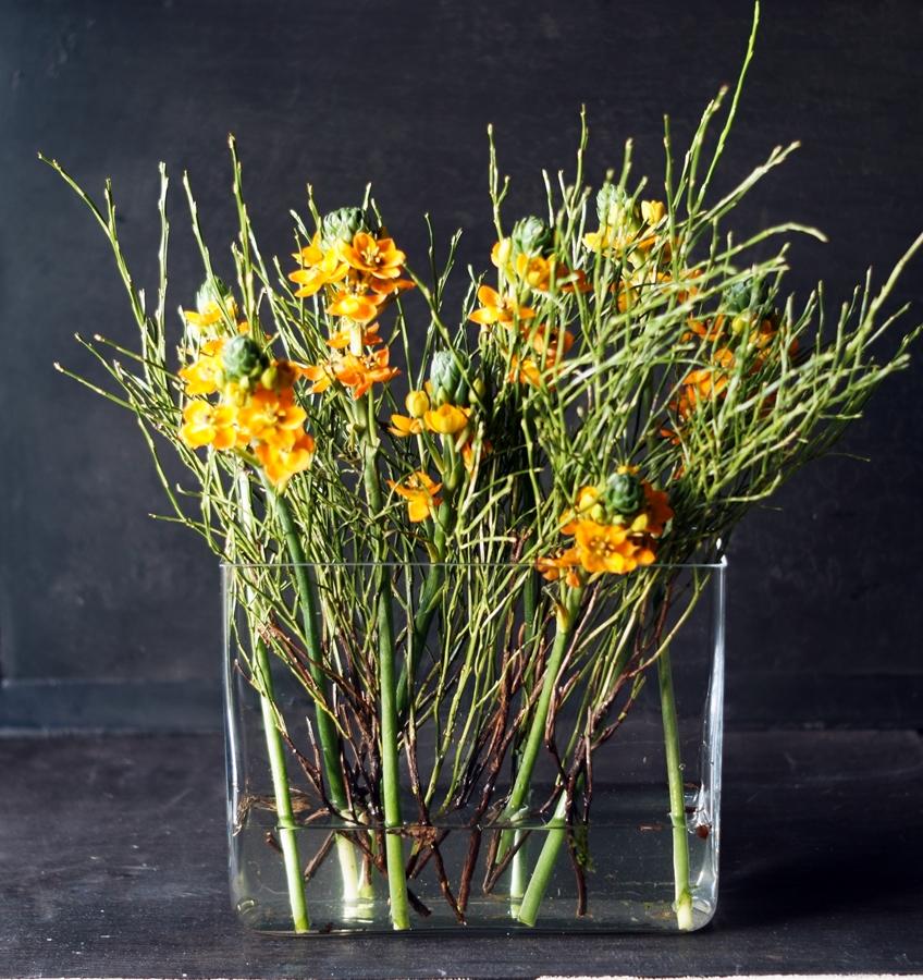 Blog + Fotografie by it's me! - Wohnen - orangefarbener Milchstern in einer Glasvase